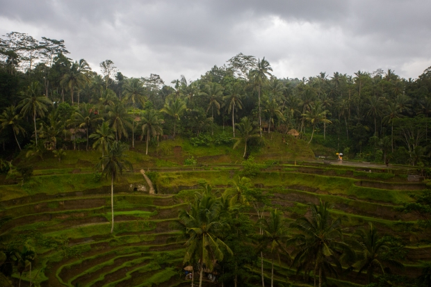 Bali-4